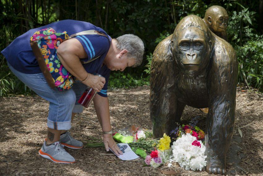 Gorilla Cincinnati